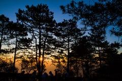 skogen sörjer soluppgång arkivbild