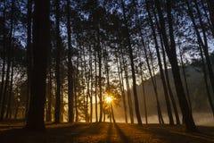 skogen sörjer soluppgång Royaltyfri Fotografi
