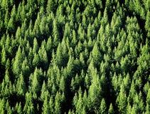 skogen sörjer treen Arkivbild