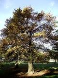skogen sörjer trees Arkivbild