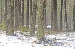 skogen sörjer vinter arkivbilder