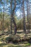 Skogen ses i sommaren på middagar royaltyfria foton