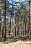 Skogen ses i sommaren på middagar arkivfoton