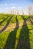 skogen shadows treen Royaltyfri Foto