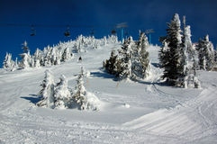 skogen skidar lutningssnow Royaltyfri Fotografi
