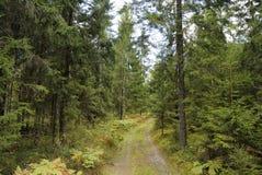 Skogen skissar Arkivbild