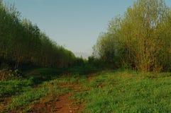 Skogen skurar grändnaturen Royaltyfri Fotografi