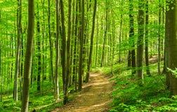 Skogen släpar träd i härlig grön natur arkivbilder