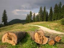 skogen sparar Arkivfoto
