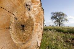 skogen sparar Fotografering för Bildbyråer