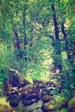 Skogen strömmer Royaltyfria Bilder