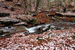 Skogen strömmer Royaltyfri Fotografi