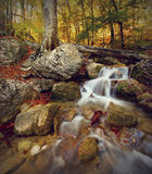 Skogen strömmer Arkivfoton