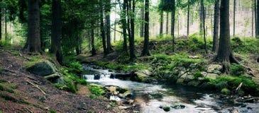 Skogen strömmer Arkivbild