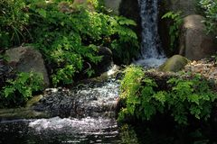 Skogen strömmer Royaltyfri Foto