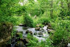Skogen strömmer Royaltyfria Foton