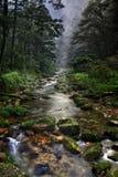 Skogen strömmer i platsen för arvet för den Kina, Zhangjiajie UNESCO-världen. Fotografering för Bildbyråer