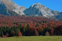 skogen vänder rött royaltyfri foto