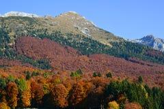 skogen vänder rött i höst royaltyfri foto