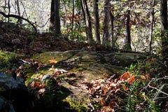 Skogen vaggar Royaltyfri Bild