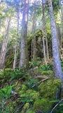 Skogen vaggar Arkivbild