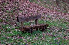 Skogen vilar med träbänken royaltyfri fotografi