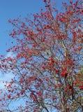 Skogen vimlar med färgglada bär Arkivbild