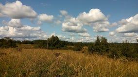 Skogfält under de hängande över bomullsmolnen arkivbilder