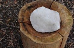 Skogförlagematare med salt för djur arkivbilder