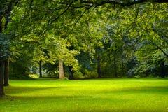 skogfjäder Arkivfoto