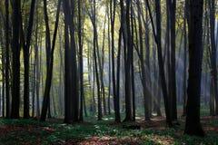 skogfjäder Arkivbild
