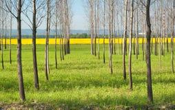 skogfjäder Royaltyfria Bilder