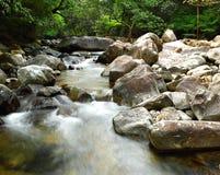 skogfjädervatten Arkivfoto