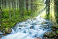 skogflod arkivfoto