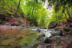 skogflod Fotografering för Bildbyråer