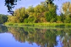 skogflod Royaltyfri Fotografi