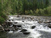 skogflod Royaltyfri Bild