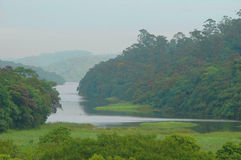 skogflod Arkivbild