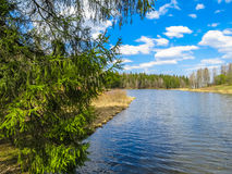 Skogflod i den tidiga våren Arkivfoton
