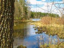 Skogflod i den tidiga våren Arkivbilder