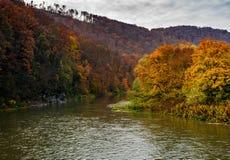 Skogflod i höstberg Royaltyfria Foton