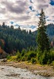 Skogflod i höstlig bygd Royaltyfria Bilder