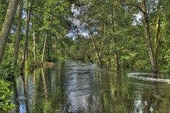 Skogflod i HDR Arkivbilder