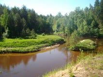 Skogflod i sommar Fotografering för Bildbyråer