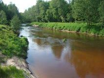 Skogflod i sommar Royaltyfri Fotografi