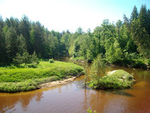 Skogflod i sommar Royaltyfri Bild