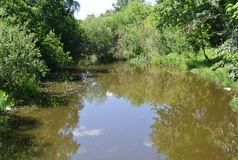 Skogflod i Uralsna på en solig dag Ryssen landskap Natur Royaltyfria Bilder