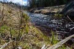 Skogflod i vår Arkivbilder