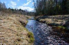 Skogflod i vår Arkivfoton