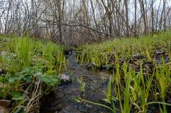 Skogflod i vår Fotografering för Bildbyråer